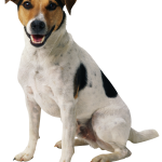 Dog Transparent Background