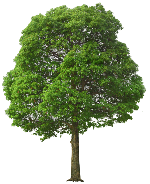Green Tree PNG
