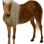 Horse Transparent Background