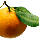 Oranges Fruit Transparent Background