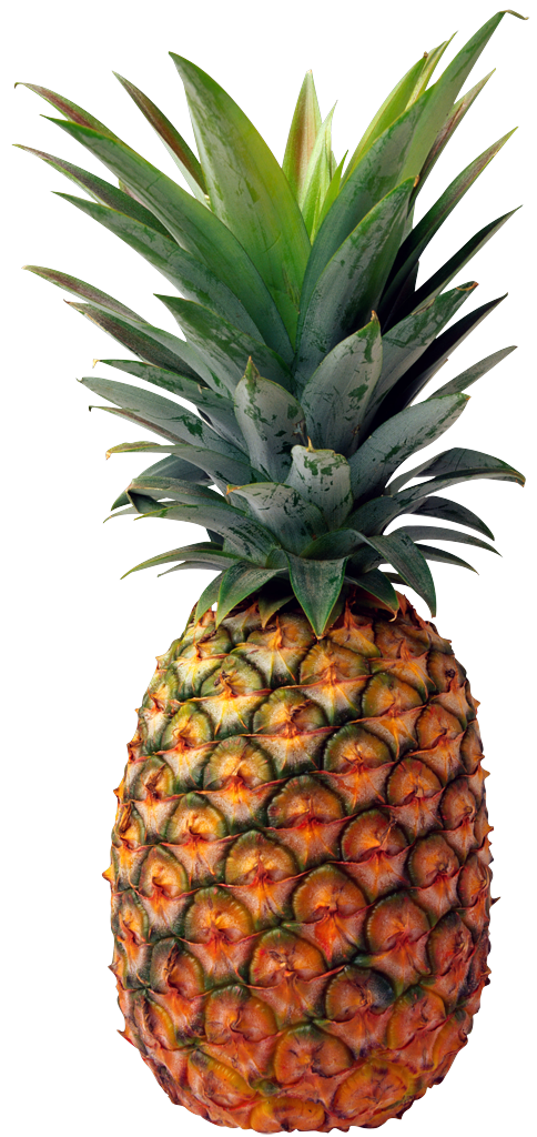 Pineapple Fruit Clipart